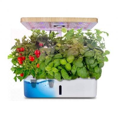 Moistenland Indoor Herb Garden Starter Kit